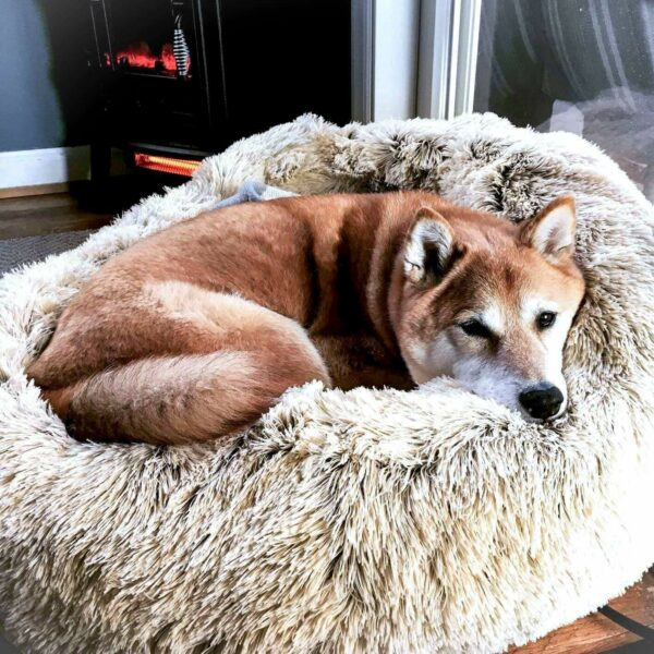 DeepSleep Calming Bed™ – Official Retailer
